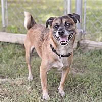 Adopt A Pet :: Bullet - Huntsville, AL