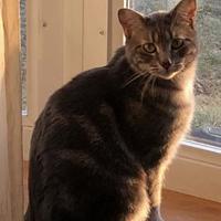 Adopt A Pet :: Smoky - Romeoville, IL