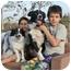 Photo 2 - Border Collie Dog for adoption in San Pedro, California - BOOTCHY