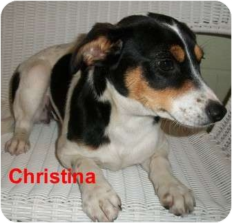 Terrier (Unknown Type, Small) Mix Dog for adoption in Slidell, Louisiana - Chrisrina