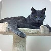 Adopt A Pet :: Spock - Pineville, NC