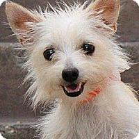 Adopt A Pet :: Betsy - La Habra Heights, CA
