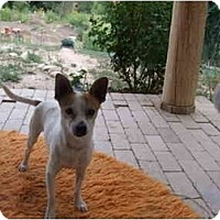 Adopt A Pet :: Jones - Chimayo, NM