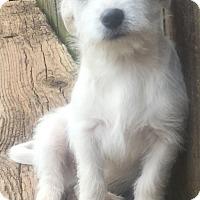 Adopt A Pet :: Evan - Smyrna, GA