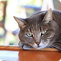 Adopt A Pet :: Pam Pam -$10-  House Spirit - Brimfield, MA