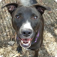 Adopt A Pet :: zzAnna Lee - Dallas, TX