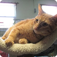 Adopt A Pet :: Chester - Reeds Spring, MO