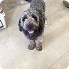 Adopt A Pet :: Bo and