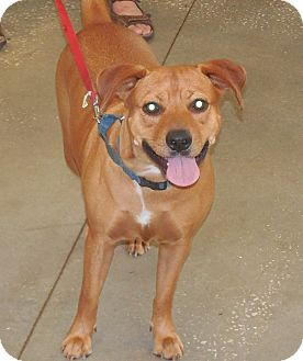 Black Mouth Cur Mix Dog for adoption in Ormond Beach, Florida - Princess