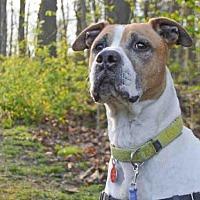 Adopt A Pet :: JOLLY - Pittsburgh, PA