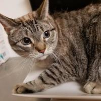 Adopt A Pet :: Louise - Huntsville, TX