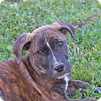 Adopt A Pet :: Karen-Adoption Pending - Marion, AR
