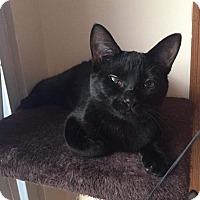 Adopt A Pet :: Sasha - Columbus, OH