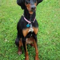 Adopt A Pet :: Julia - Manitowoc, WI