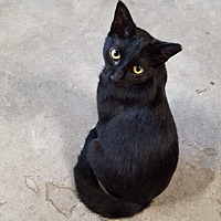 Adopt A Pet :: Starburst - Virginia Beach, VA