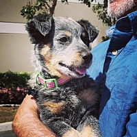 Adopt A Pet :: Kdee Love *Not Available* - Torrance, CA