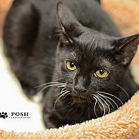 Adopt A Pet :: Miranda - Tampa, FL