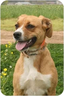 Shepherd (Unknown Type)/Terrier (Unknown Type, Medium) Mix Dog for adoption in Haughton, Louisiana - Happy Tails (Molly)