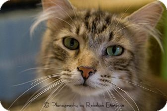 Domestic Longhair Cat for adoption in Byron Center, Michigan - Mr. T