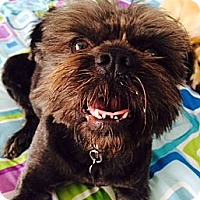 Adopt A Pet :: MIMI - ADOPTION  PENDING - Los Angeles, CA