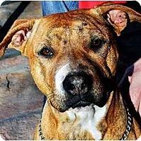 Adopt A Pet :: Ambrey - Gilbert, AZ