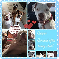 Adopt A Pet :: casper - hollywood, FL