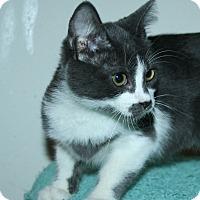 Adopt A Pet :: Hazelnut - Santa Rosa, CA