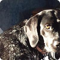 Adopt A Pet :: Angel - Alma, WI