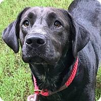 Adopt A Pet :: Jennie - CUMMING, GA
