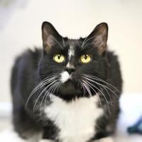 Adopt A Pet :: Shadow - Williamsburg, VA