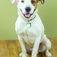 Adopt A Pet :: Rascal - West Allis, WI