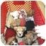 Photo 4 - Boxer/Labrador Retriever Mix Puppy for adoption in Detroit, Michigan - Hugo-Adopted