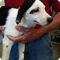 Adopt A Pet :: Willa - Southampton, PA