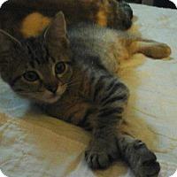 Adopt A Pet :: Paisley - Farmington, AR