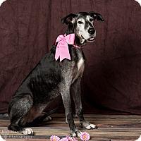 Adopt A Pet :: Ruthie - Stevens Point, WI