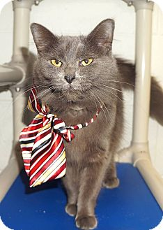 Domestic Mediumhair Cat for adoption in Lexington, North Carolina - Charlotte