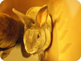 American Mix for adoption in Gloucester, Virginia - SATIN
