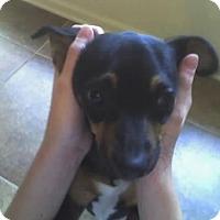 Adopt A Pet :: S Q-Tip - Lafayette, LA