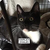 Adopt A Pet :: Harley - Santa Monica, CA