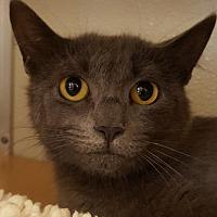 Adopt A Pet :: Onions - Grayslake, IL