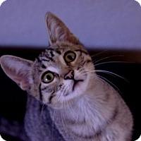 Adopt A Pet :: Ellen - Independence, MO