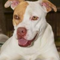 Adopt A Pet :: Bellflower - Middleburg, FL