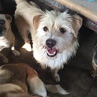 Adopt A Pet :: Orange - Oakton, VA