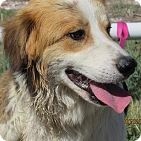 Adopt A Pet :: Griffin - Westminster, CO