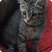 Adopt A Pet :: Tristan - Corona, CA