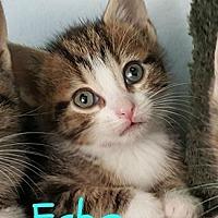 Adopt A Pet :: Echo - Plainfield, IL