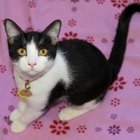 Adopt A Pet :: Kit Harlow - Glendale, AZ