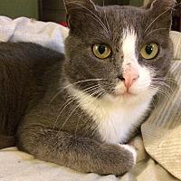 Adopt A Pet :: Lee - McCormick, SC