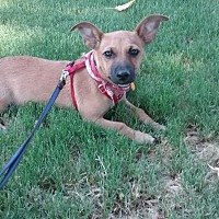 Adopt A Pet :: Jax - Parlier, CA