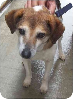 Terrier (Unknown Type, Small) Mix Dog for adoption in Somerset, Pennsylvania - Janet